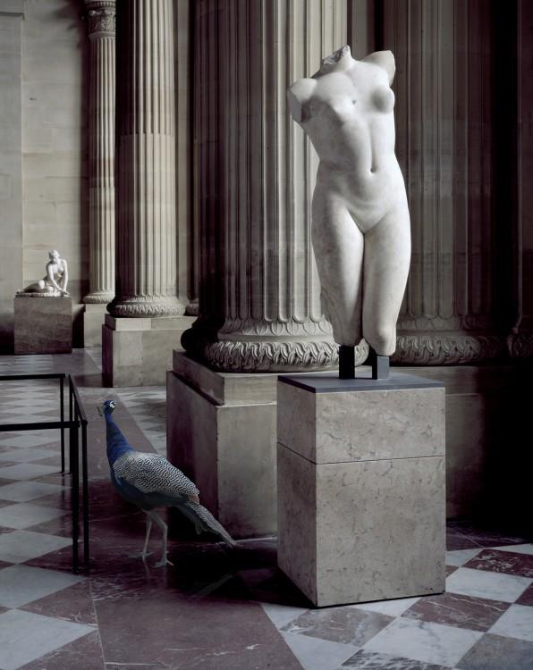 Aphrodite's torso